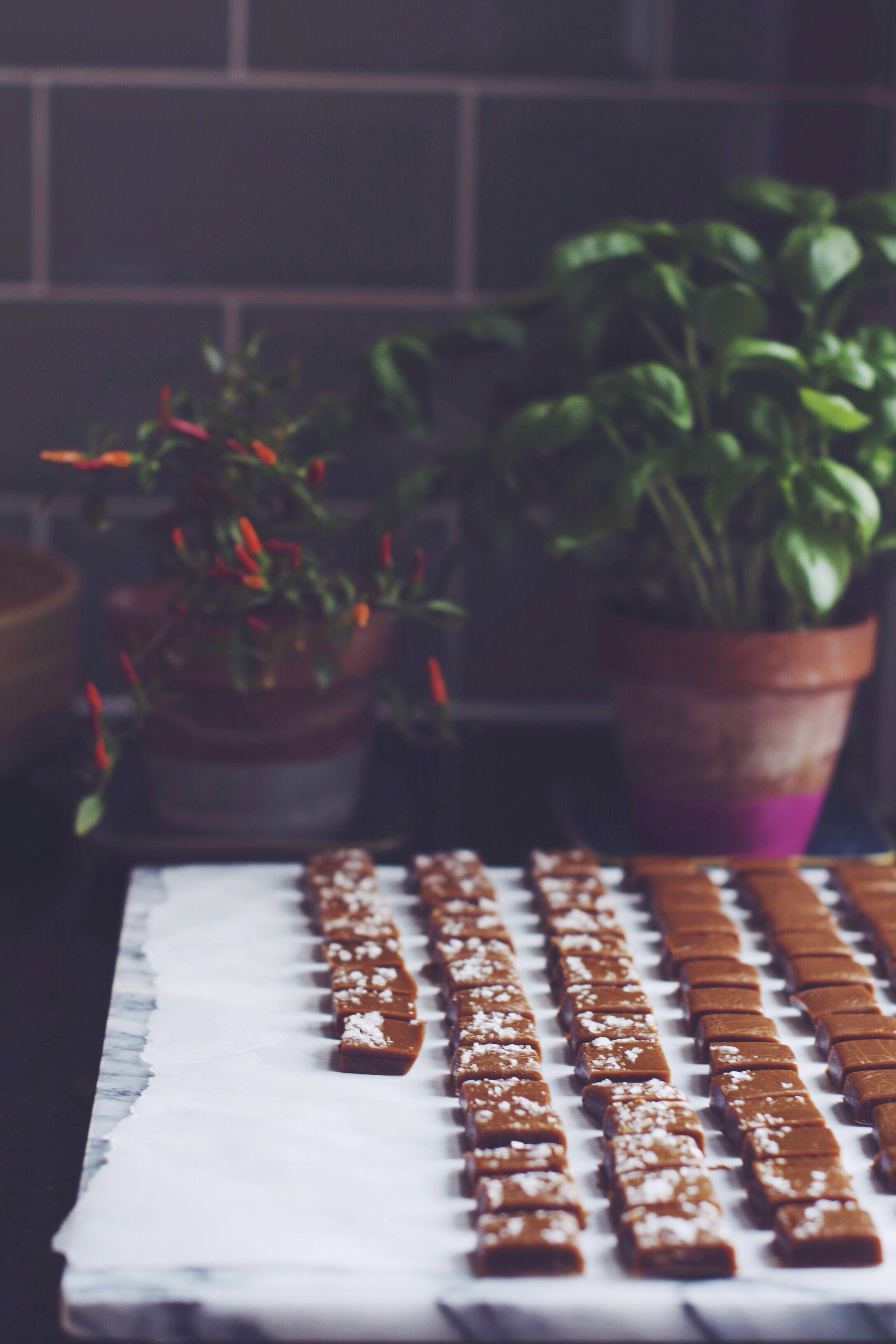 Dark Chocolate Covered Caramels | Thyme & Honey
