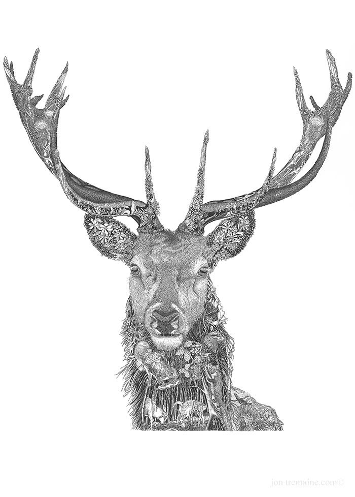Red-Stag-2-700x978.jpg