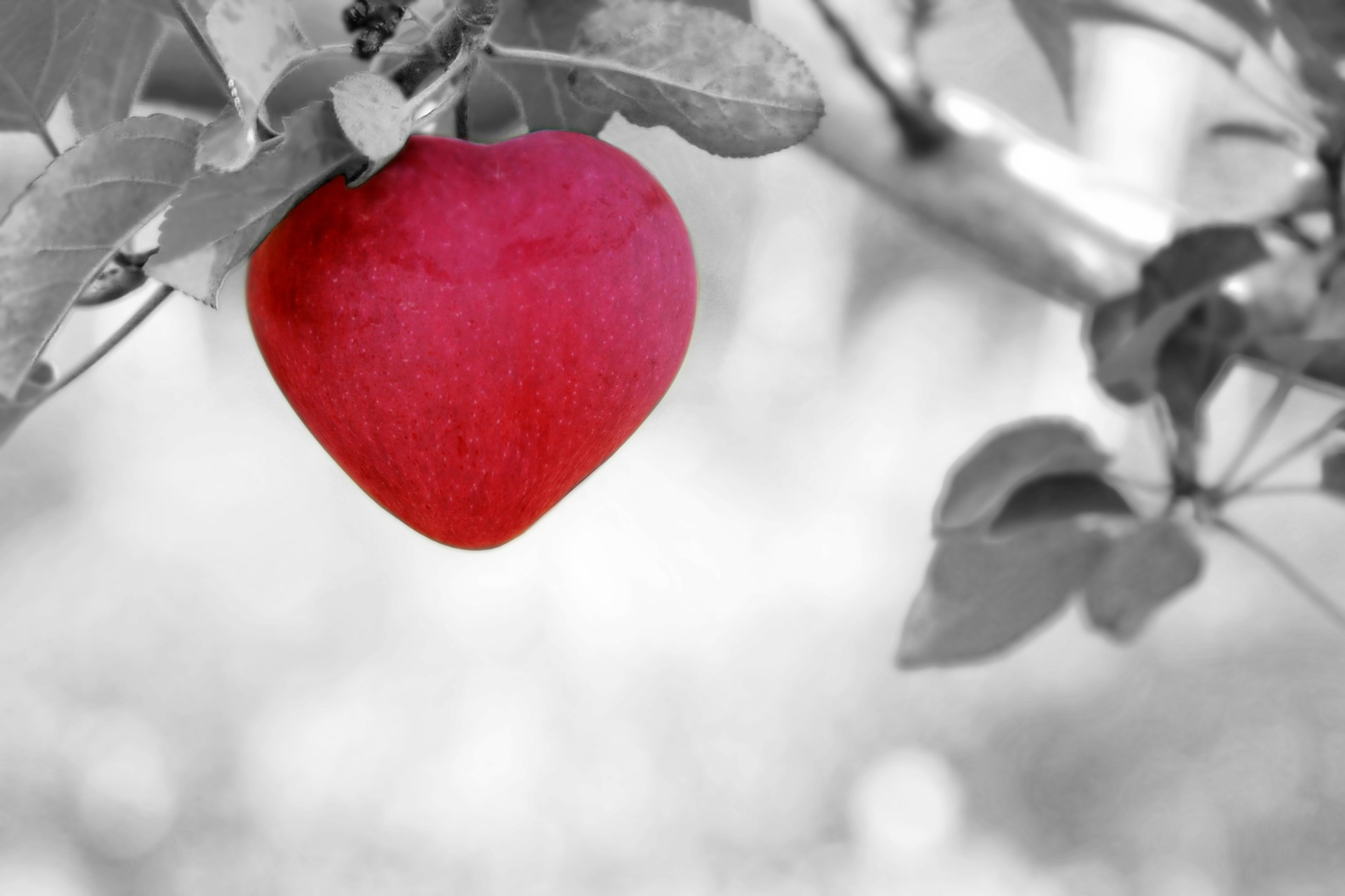 A heart shaped apple