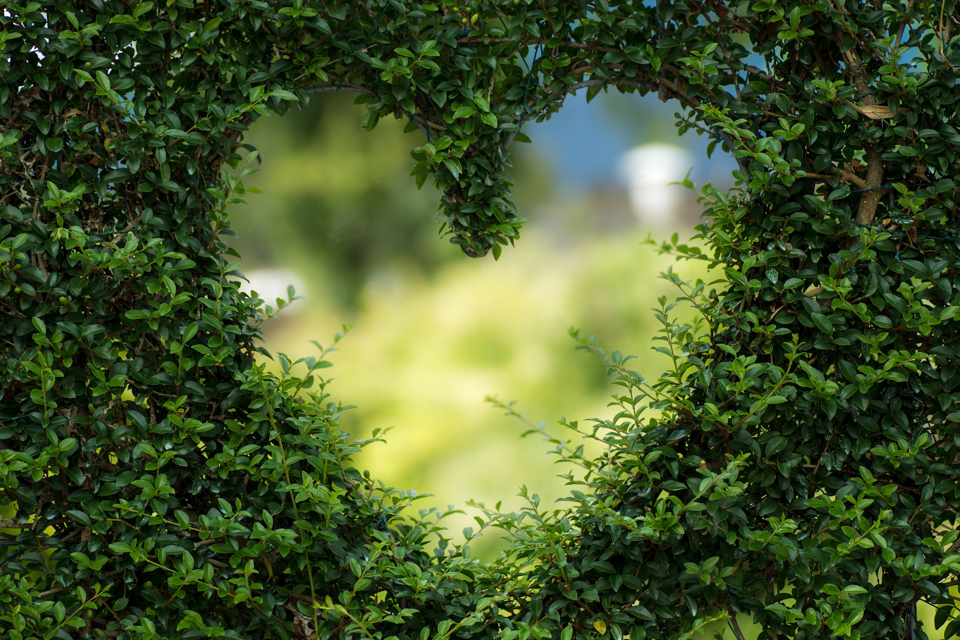 A heart in topiary