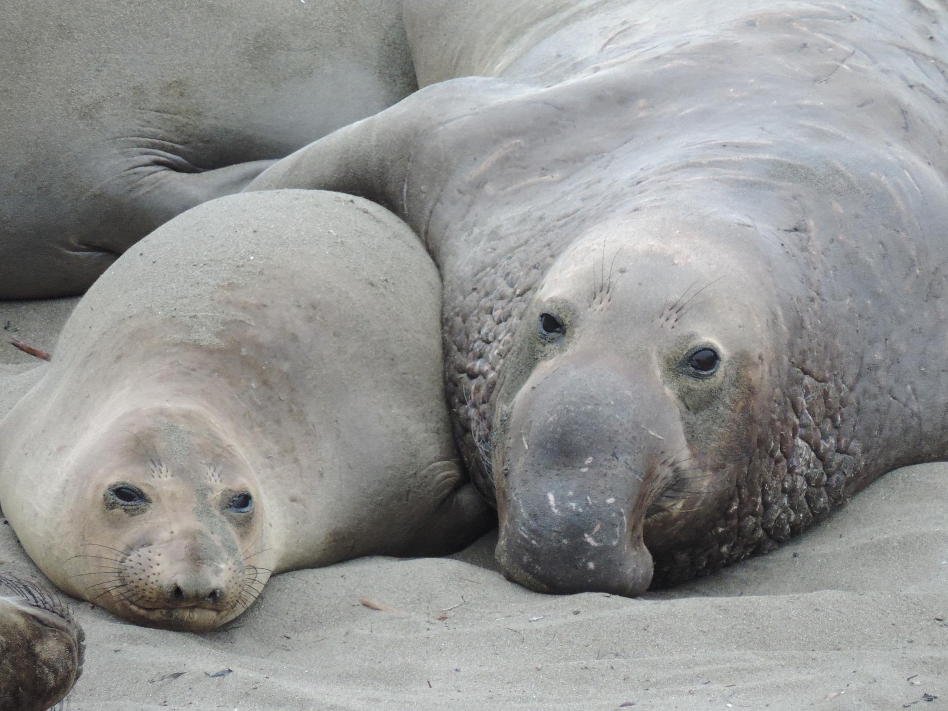 Two seals hugging