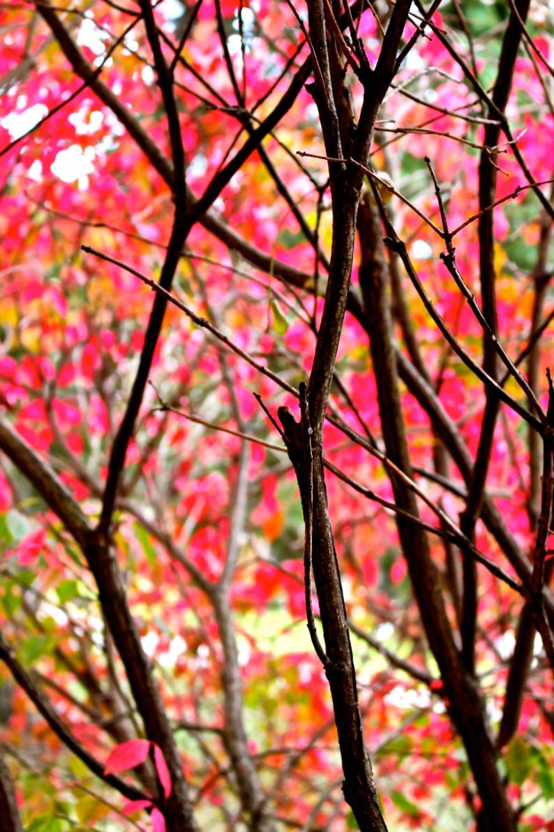 Leaves14.jpg