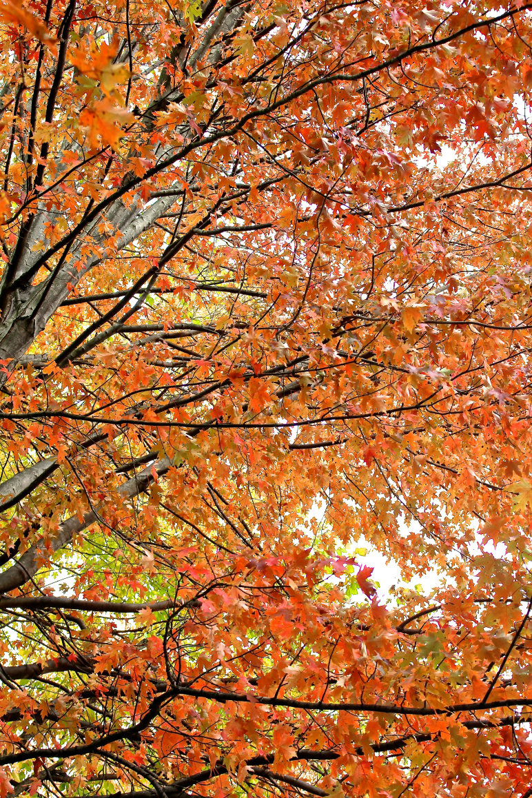 Leaves 7.jpg