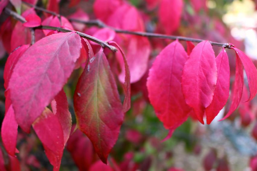 Leaves 9.jpg
