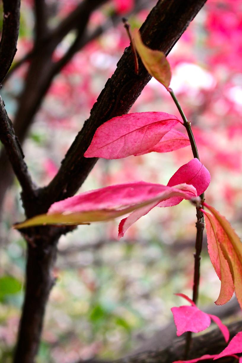 Leaves15.jpg