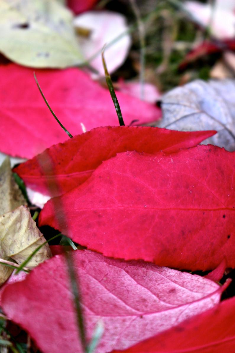 Leaves12.jpg