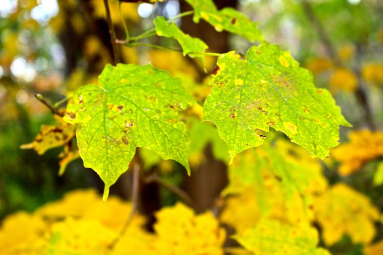 Leaves 5.jpg