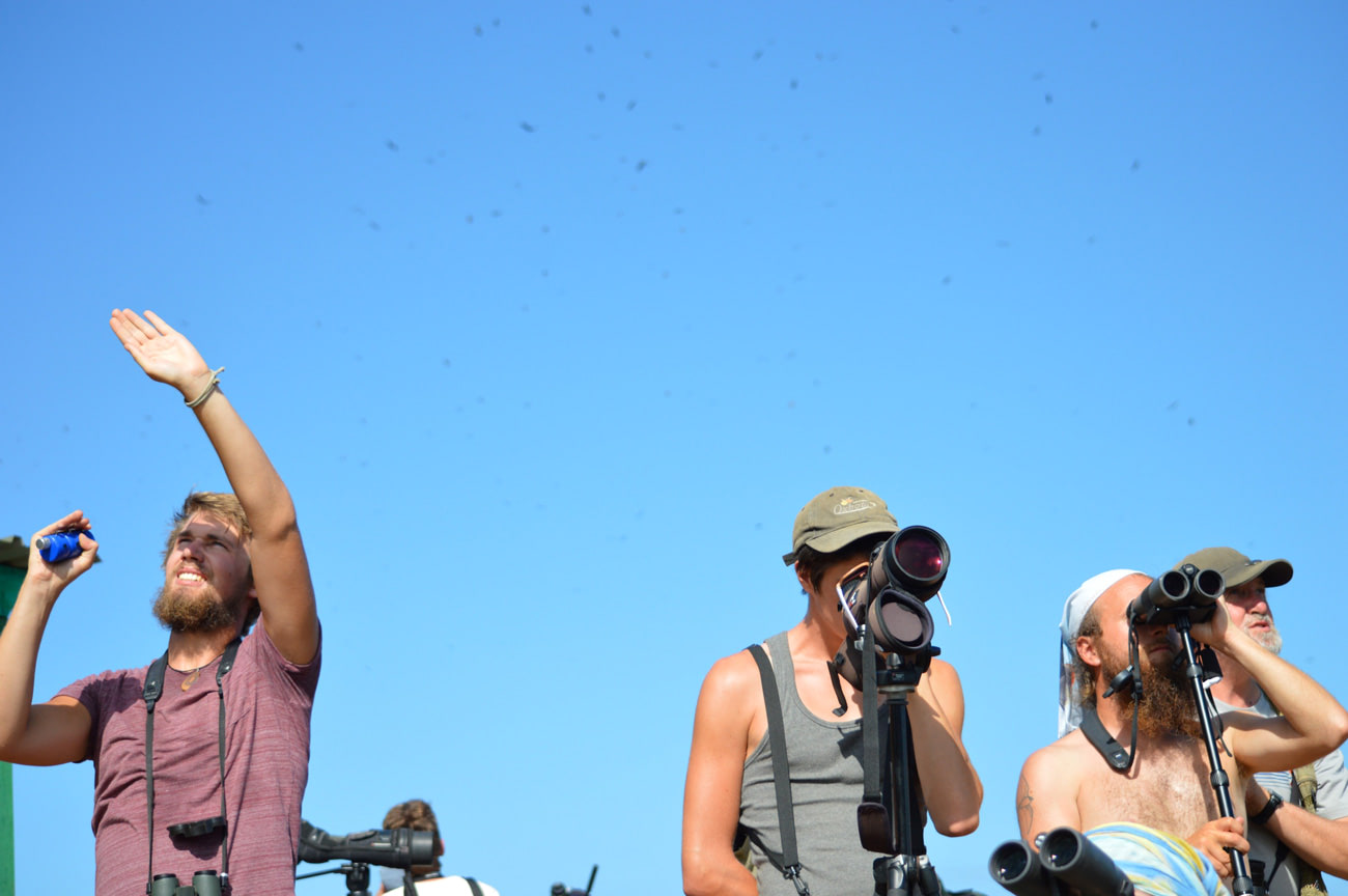 Clicking these clickers, scanning the sky through the binoculars and identifying species by scope. All. Day. Long. Photo by Martha Mutiso.