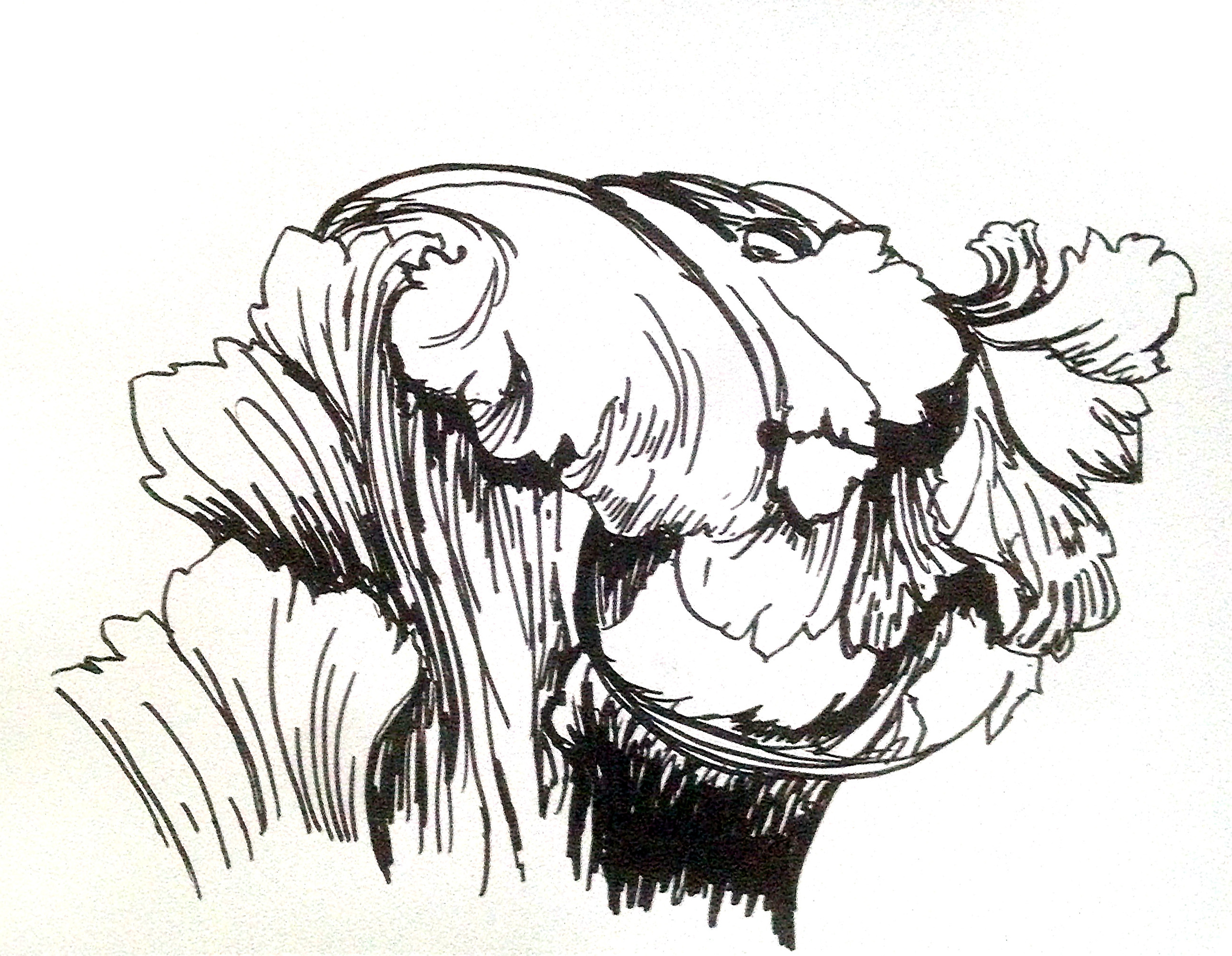 Acanthus Detail
