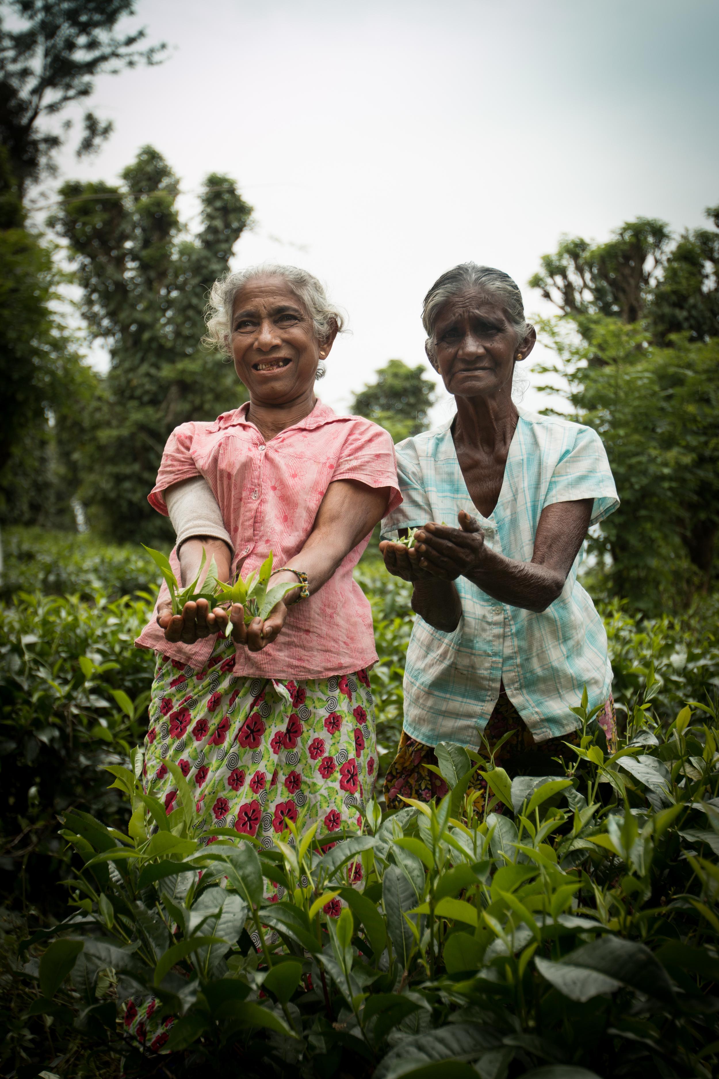 03. The Tea Ladies of Sri Lanka