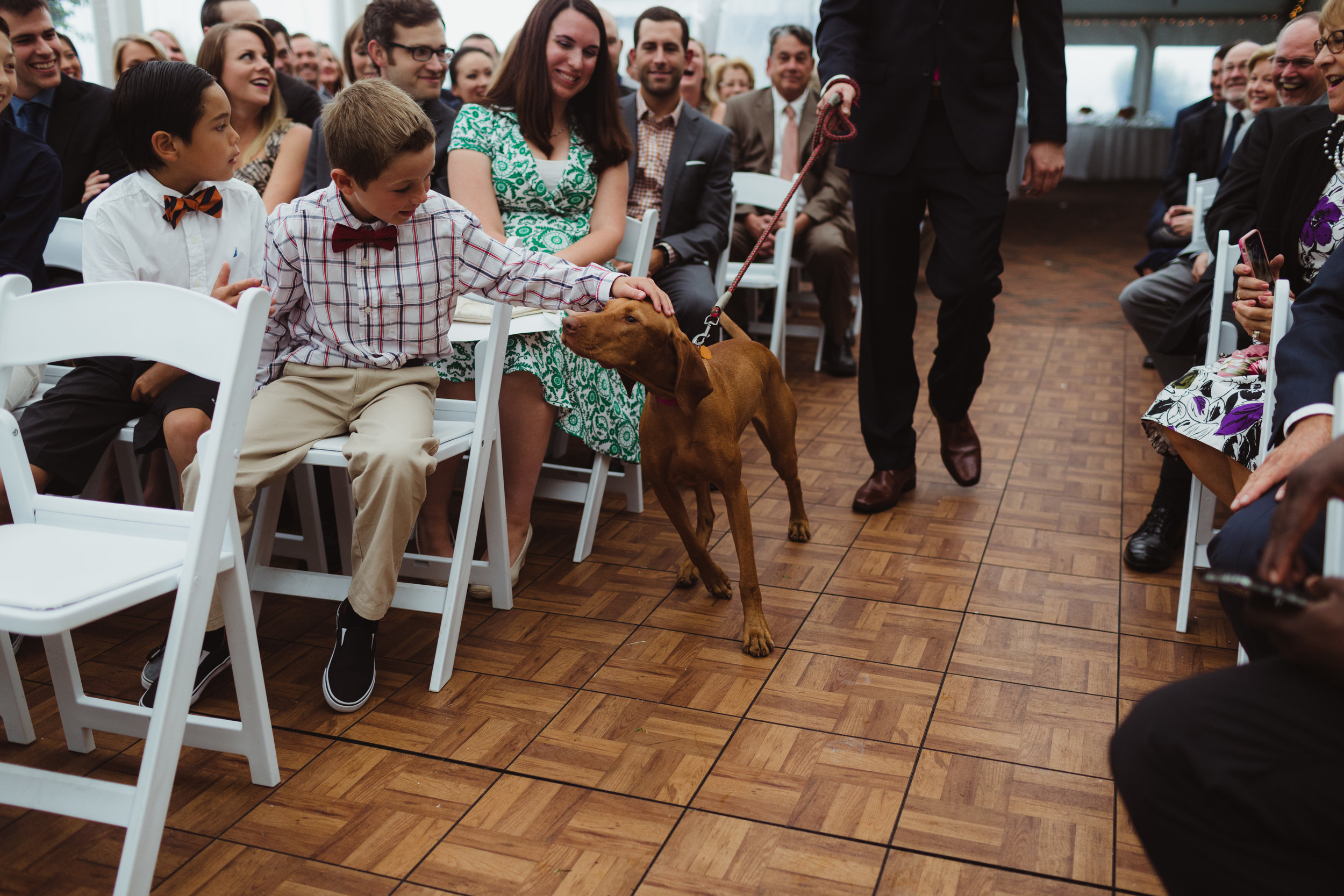 dogs as ring bearers