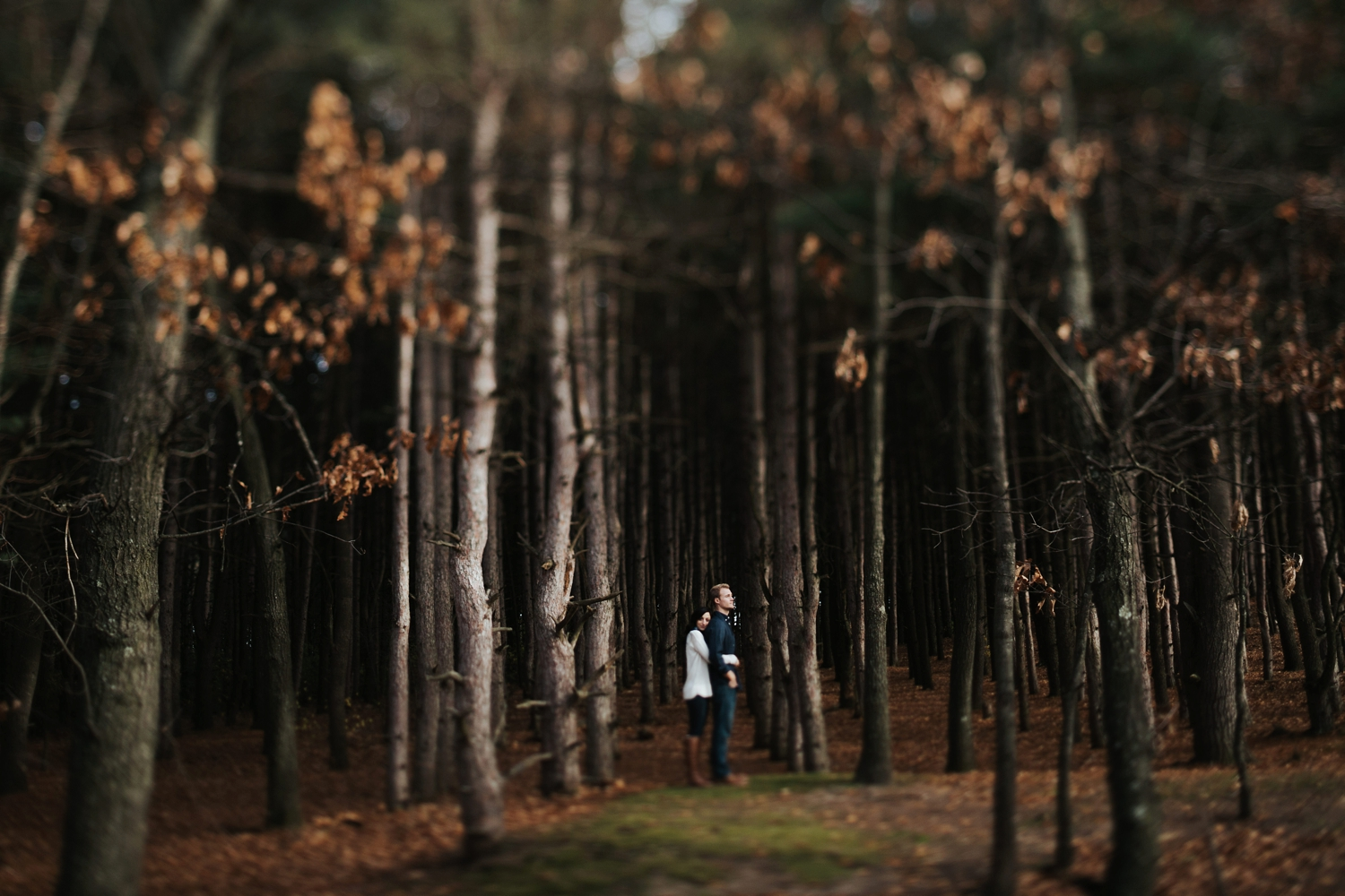 intimate and dark woodsy western michigan engagement