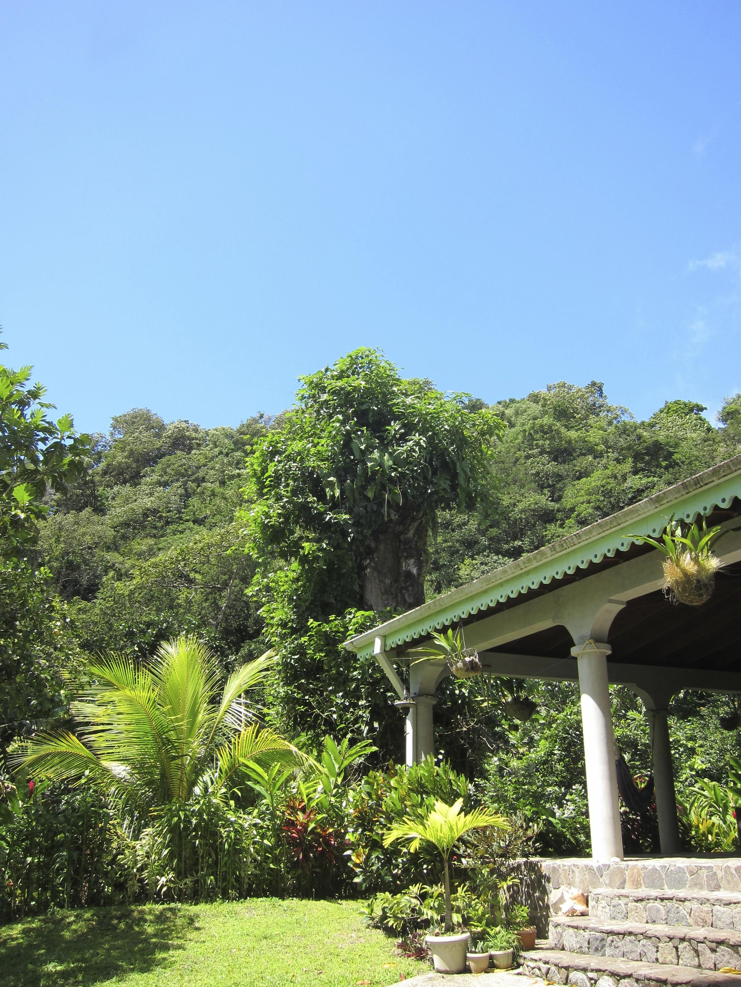 Dominica 205.jpg