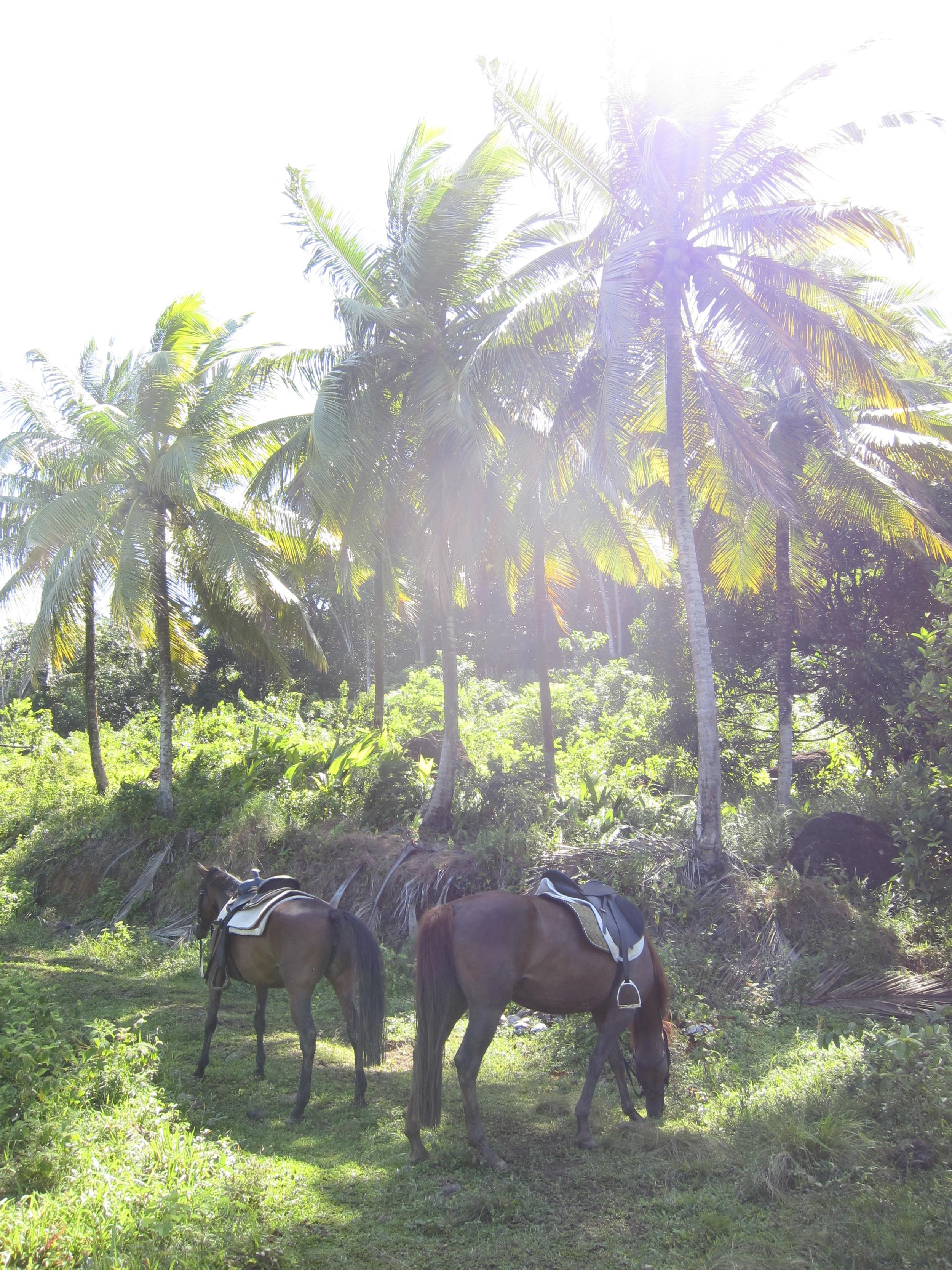 Dominica 209.jpg