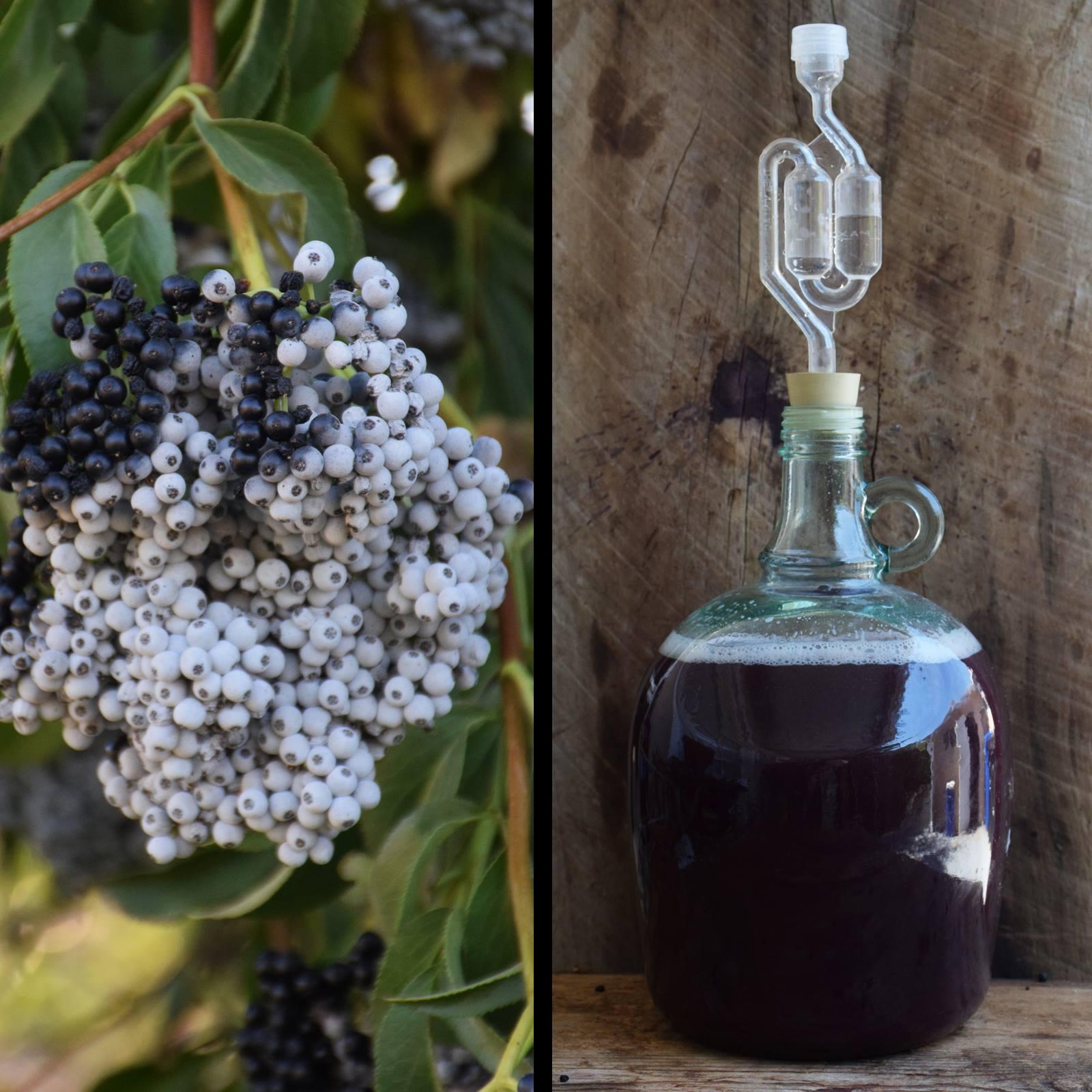 """Raw Country Elderberry Wine"" by Pascal Baudar 2017. https://www.facebook.com/pascal.baudar"
