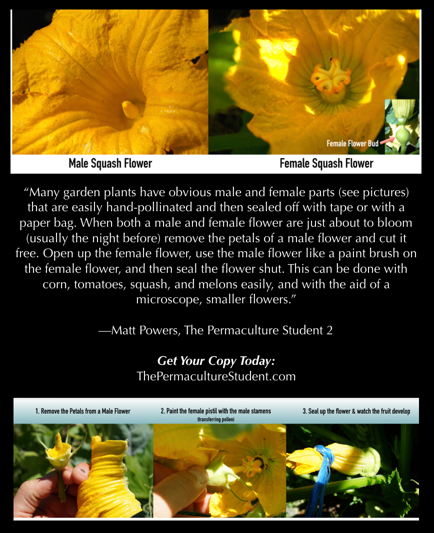 Breed Your Own Varieties! -click on the image to see more from   The Permaculture Student 2