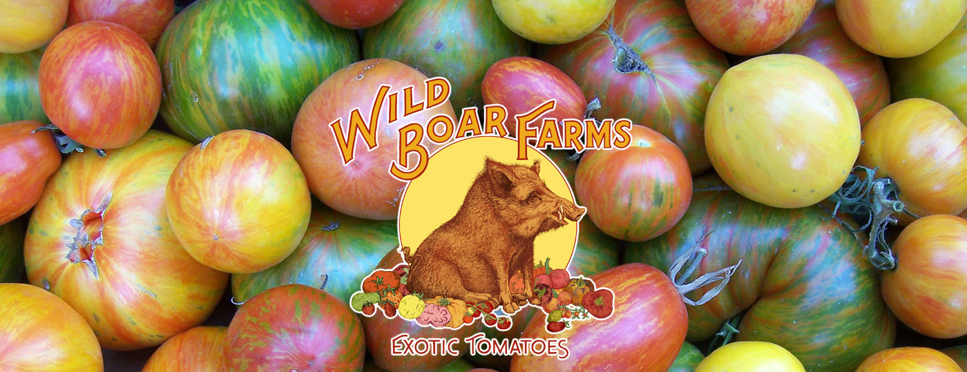 wild-boar-farms-slider-1-1.jpg