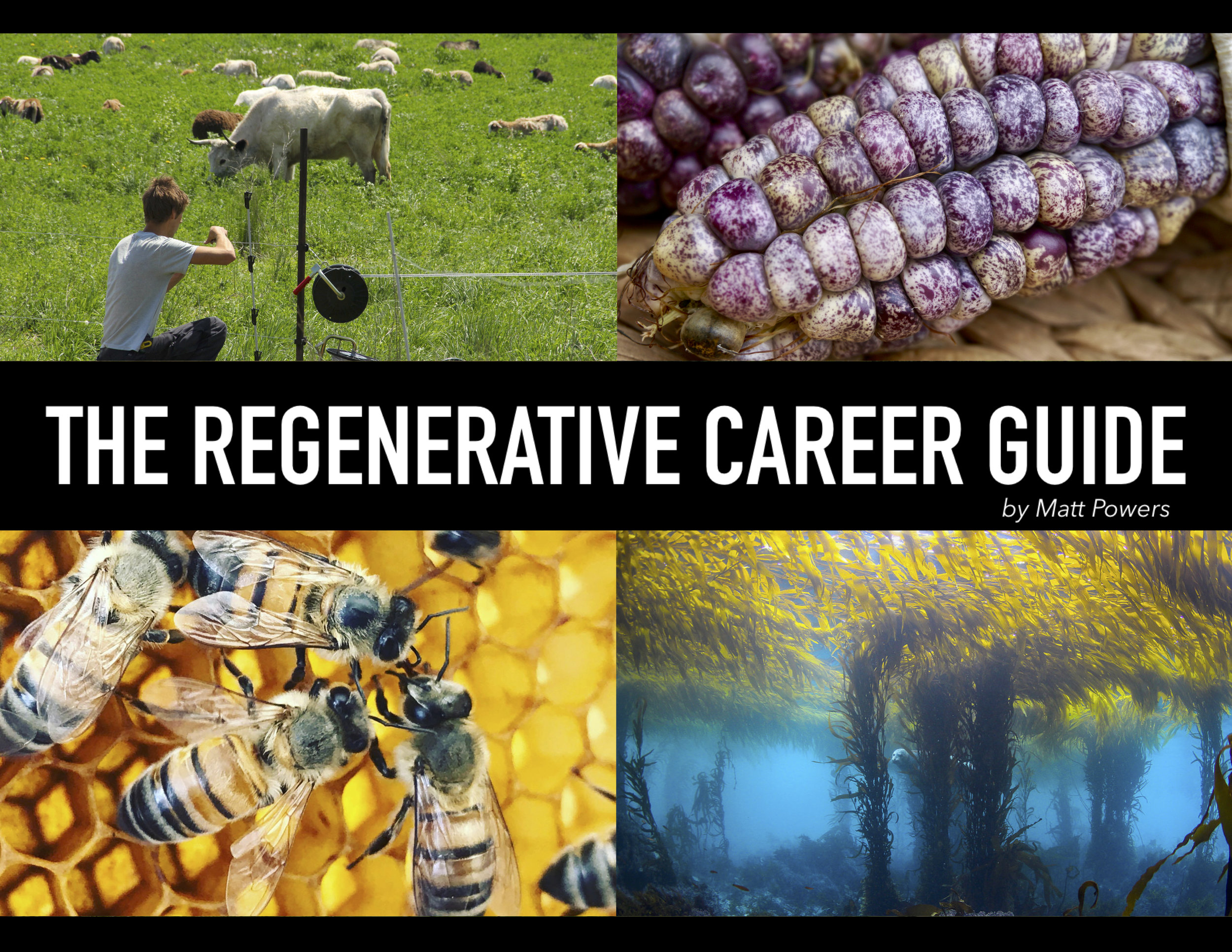 Click the image to download your eBook copy of The Regenerative Career Guide