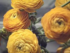0226flowerssmfeature