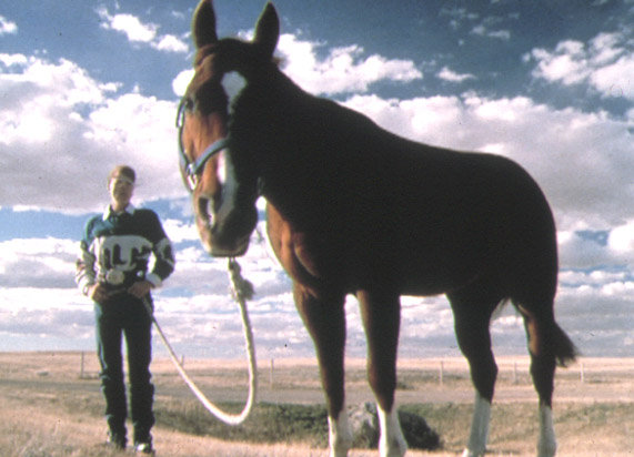 Horse-Tales-1-RODEO.jpg