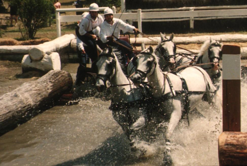 Horse-Tales-2-GFGOLD-Through-Water.jpg