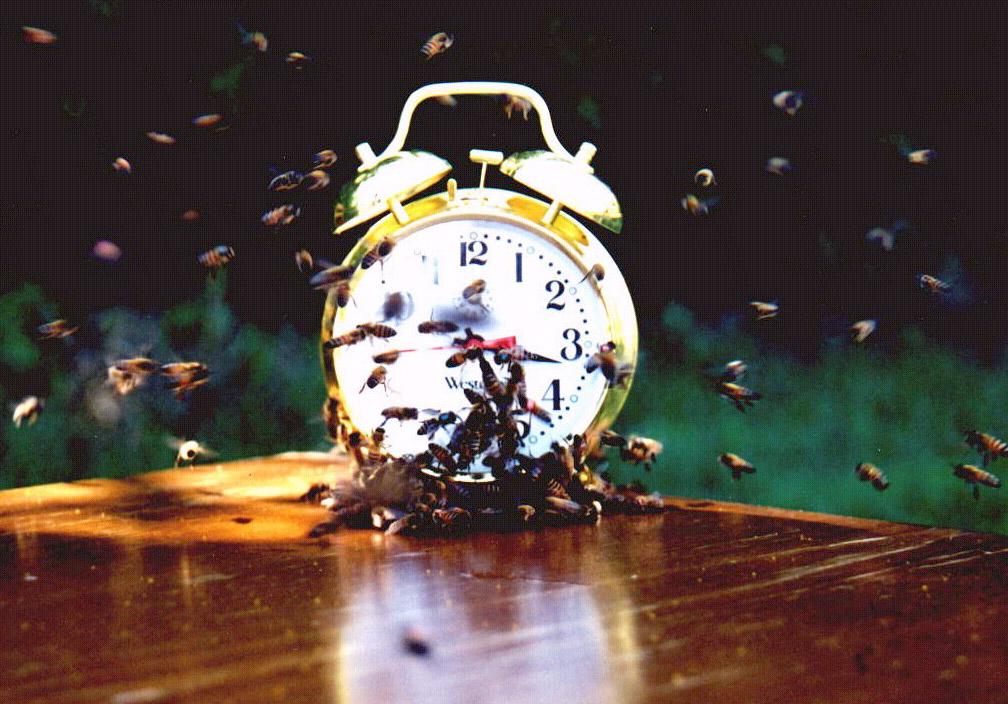 How-Animals-Tell-Time-Alarm-Clock.jpg