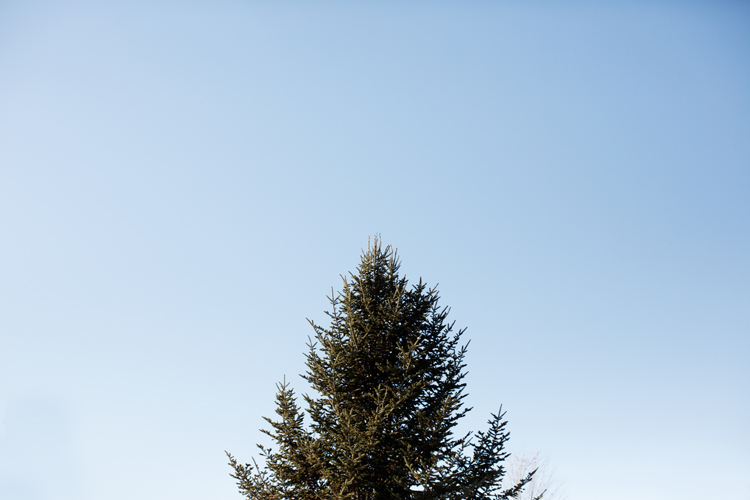 Krueger_Tree_Farm_Engagement_ShampBlog_0001