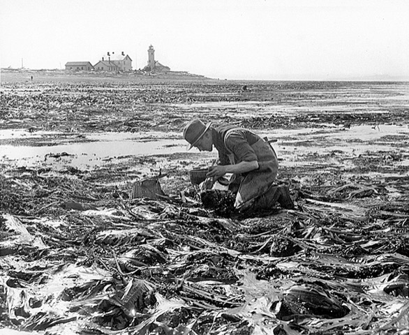 Ed Ricketts Kneeling in Kelp (1930)  from Pat Hathaway Collection  www.caviews.com