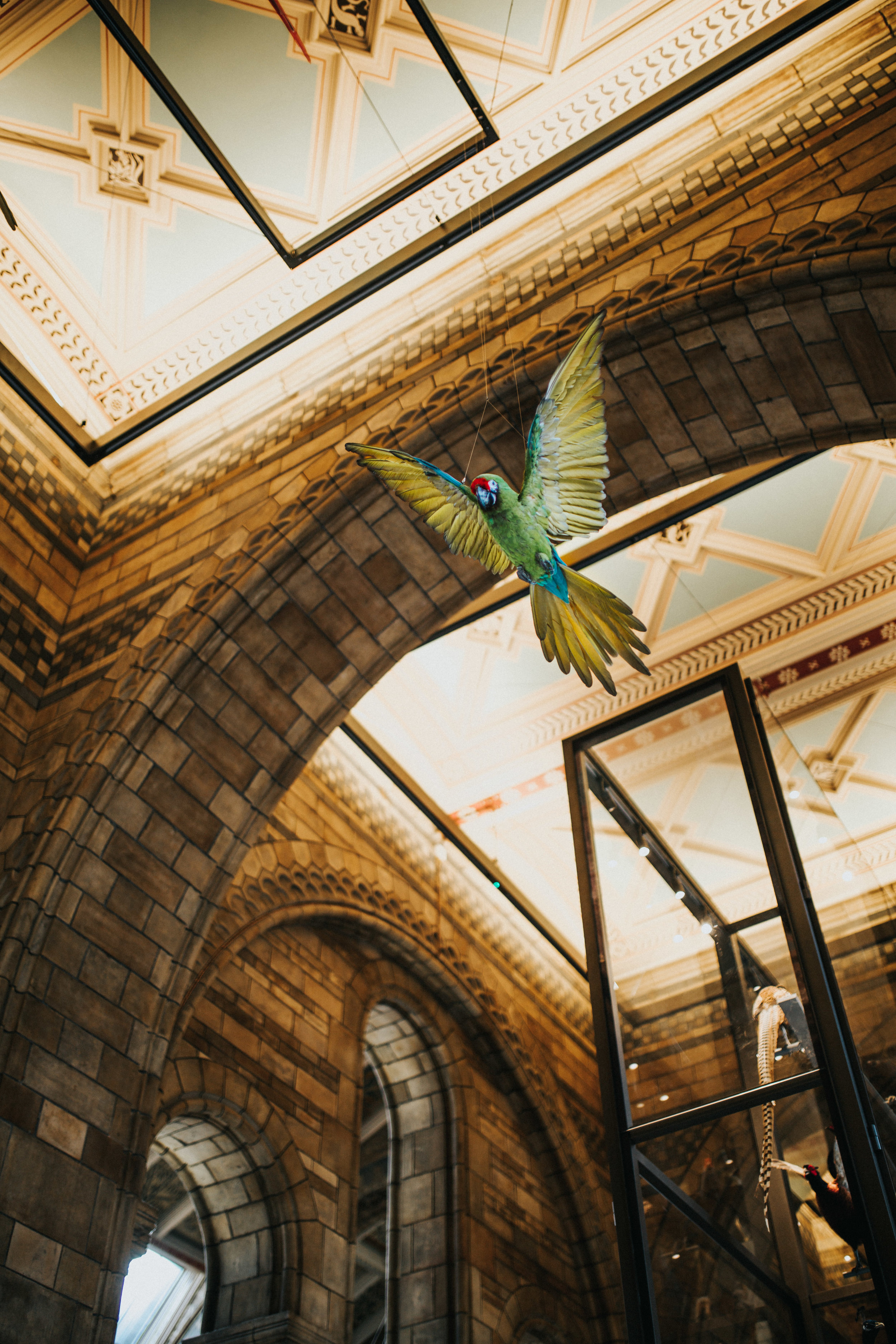 London Architecture Travel Photography - Natural History Museum