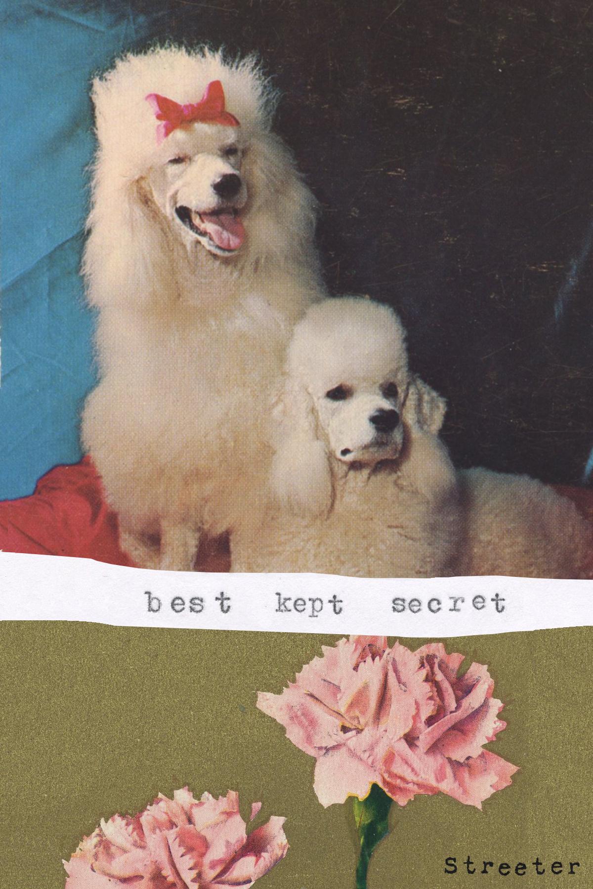 carddogs.jpg