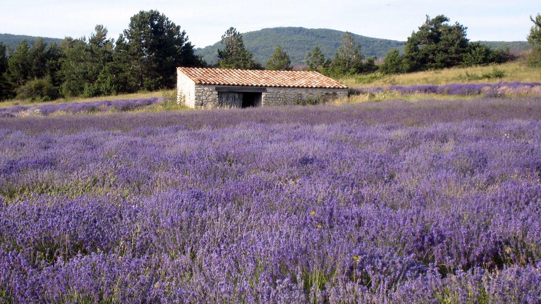 lavender w. tool shade .1.2.jpg