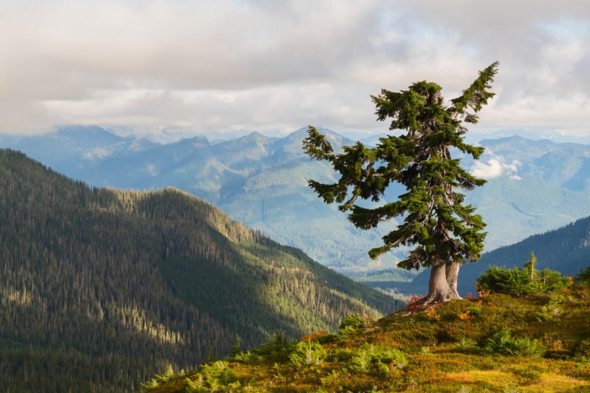 Alpine Sentinel
