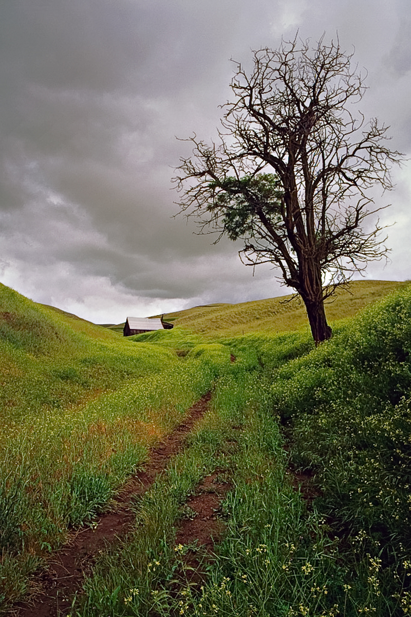 Lone Tree Barn