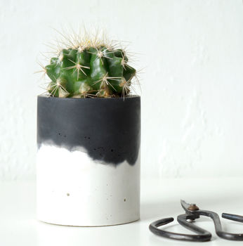 normal_black-topped-concrete-planter-with-cactus.jpg