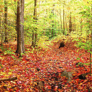Hiking Trail covered in Fall Leaves. Link to information about Burlington, Vermont and activities in surrounding areas