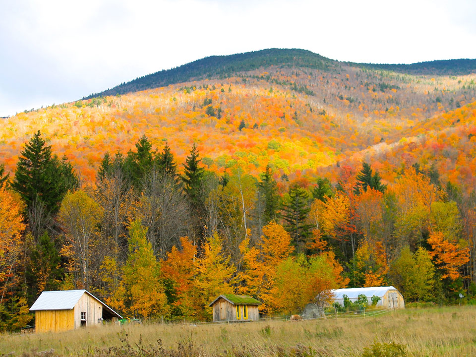 Fall foliage in Vermont