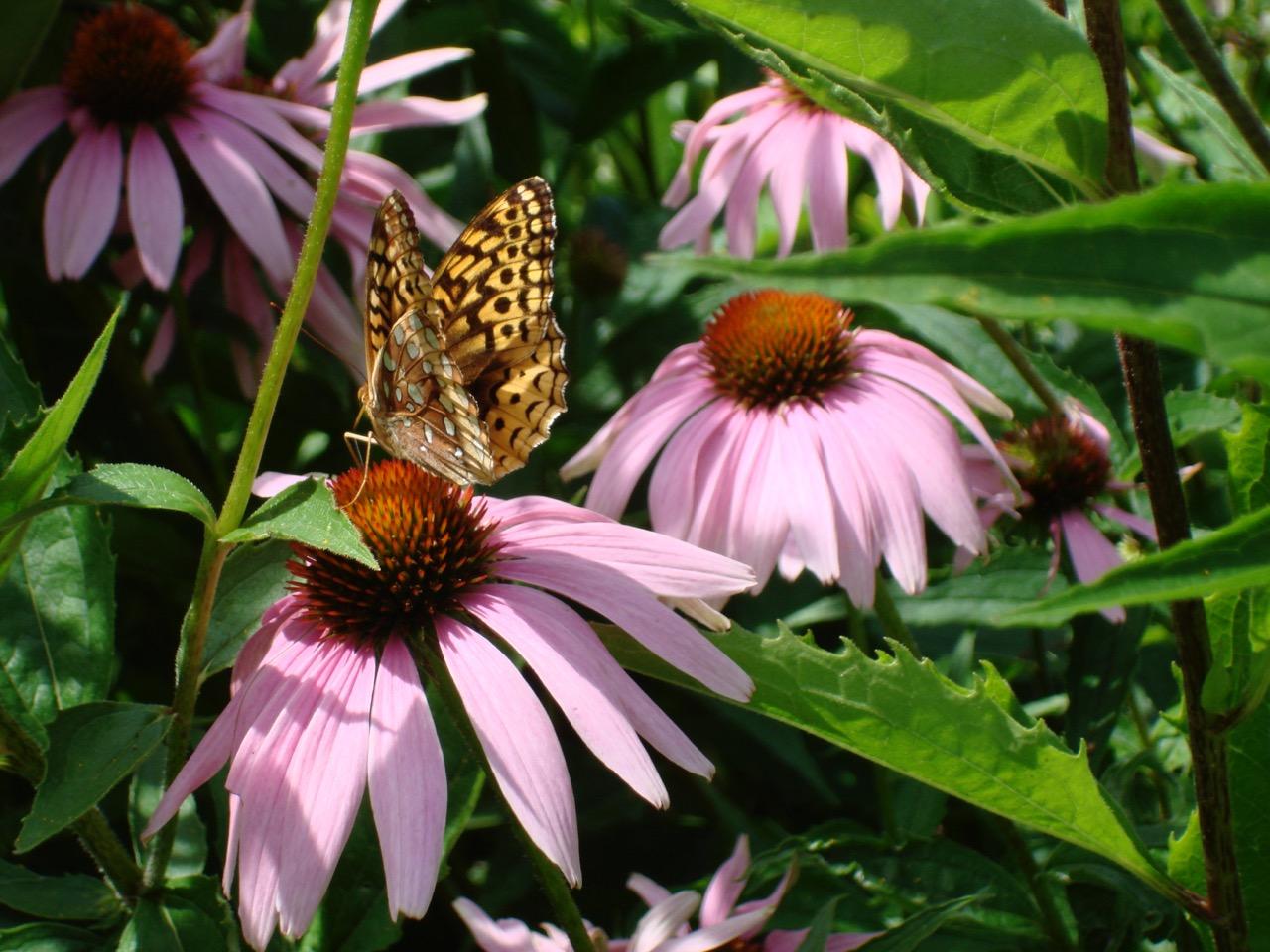 Butterfly Bounty in Burlington