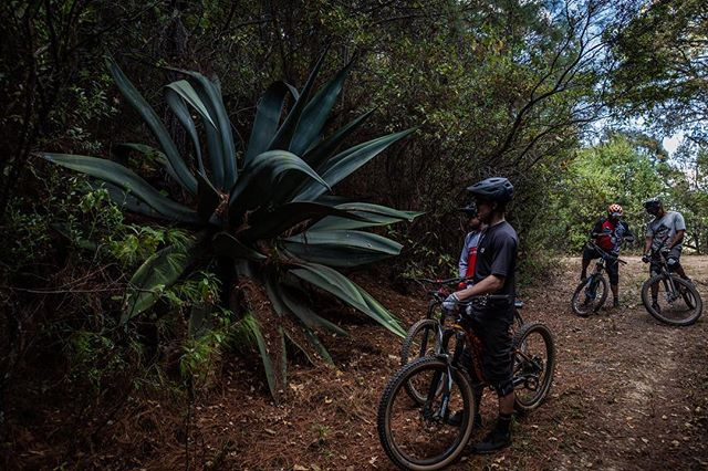 Things are just bigger here. @jamesdoerfling & @kurtsorge checking out the foliage #agave @oaxacabikeexpeditions 📷 - @jp.gendron  #mezcal #visitmexico  #mexico