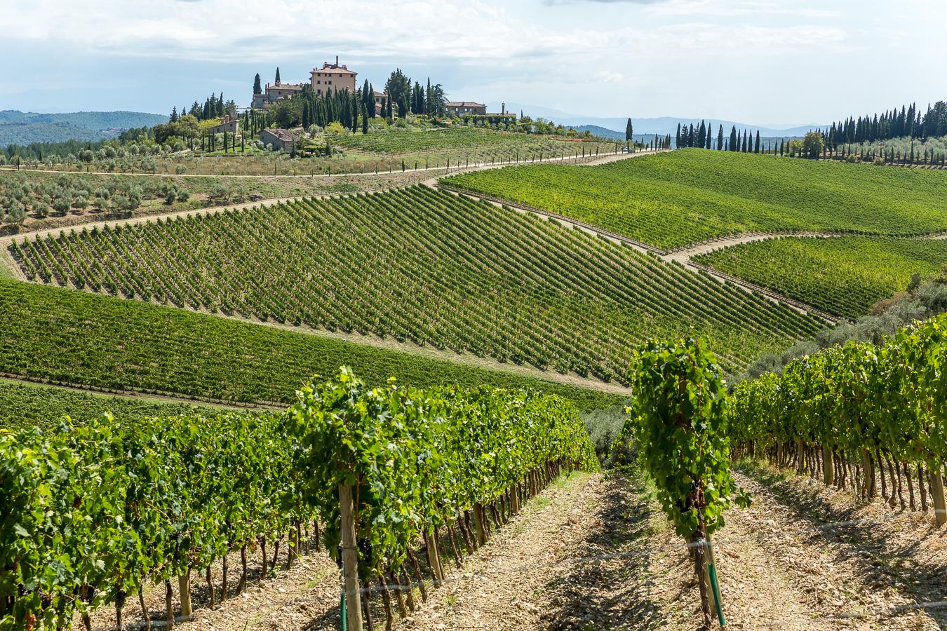 Vineyard near Greve en Chianti