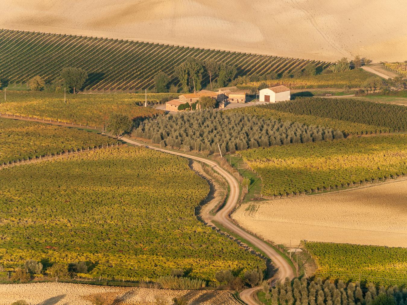 Vineyards around Montalcino.