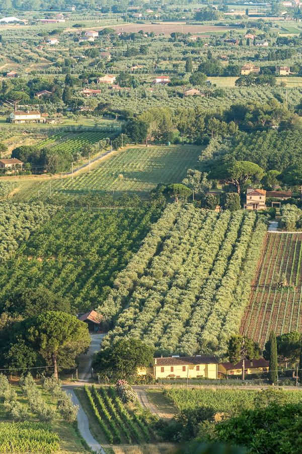 Vineyards and Olive Groves at the edge of the Mediterranean Sea from Castagna Carducci in Western Tuscany.