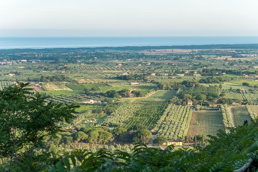 Vineyards around Castagneto Carducci.