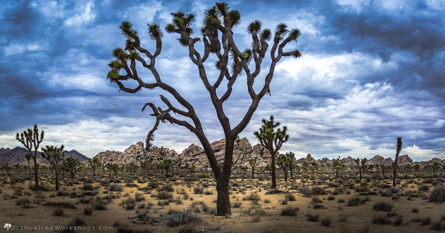 Joshua Tree B&B Photography Timelapse Workshops