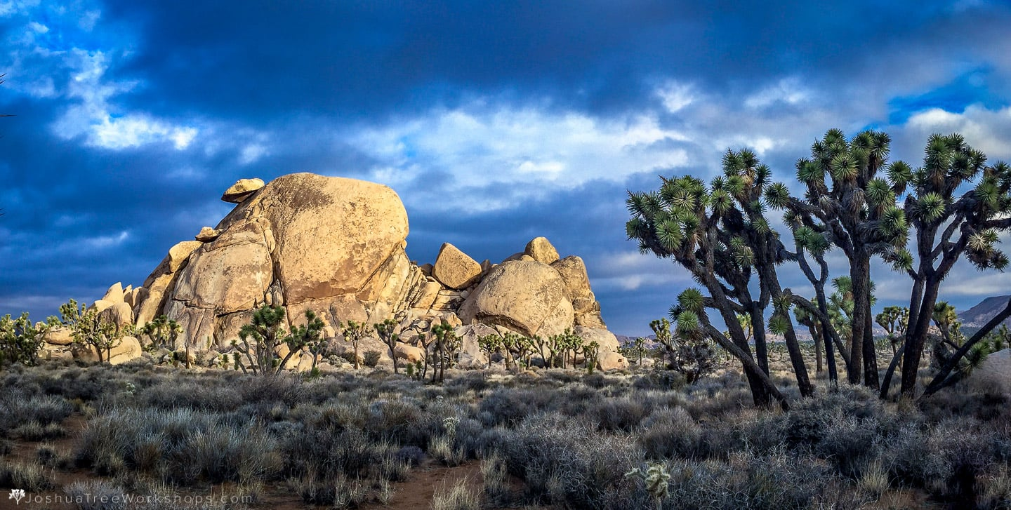 Joshua Tree Photography Timelapse Workshops