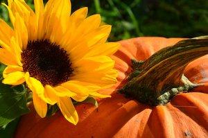 fall floral fun.jpg