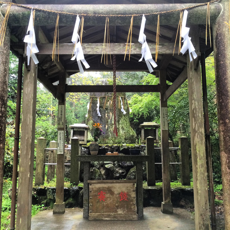 Shrine Cat, Fushimi Inari Taisha