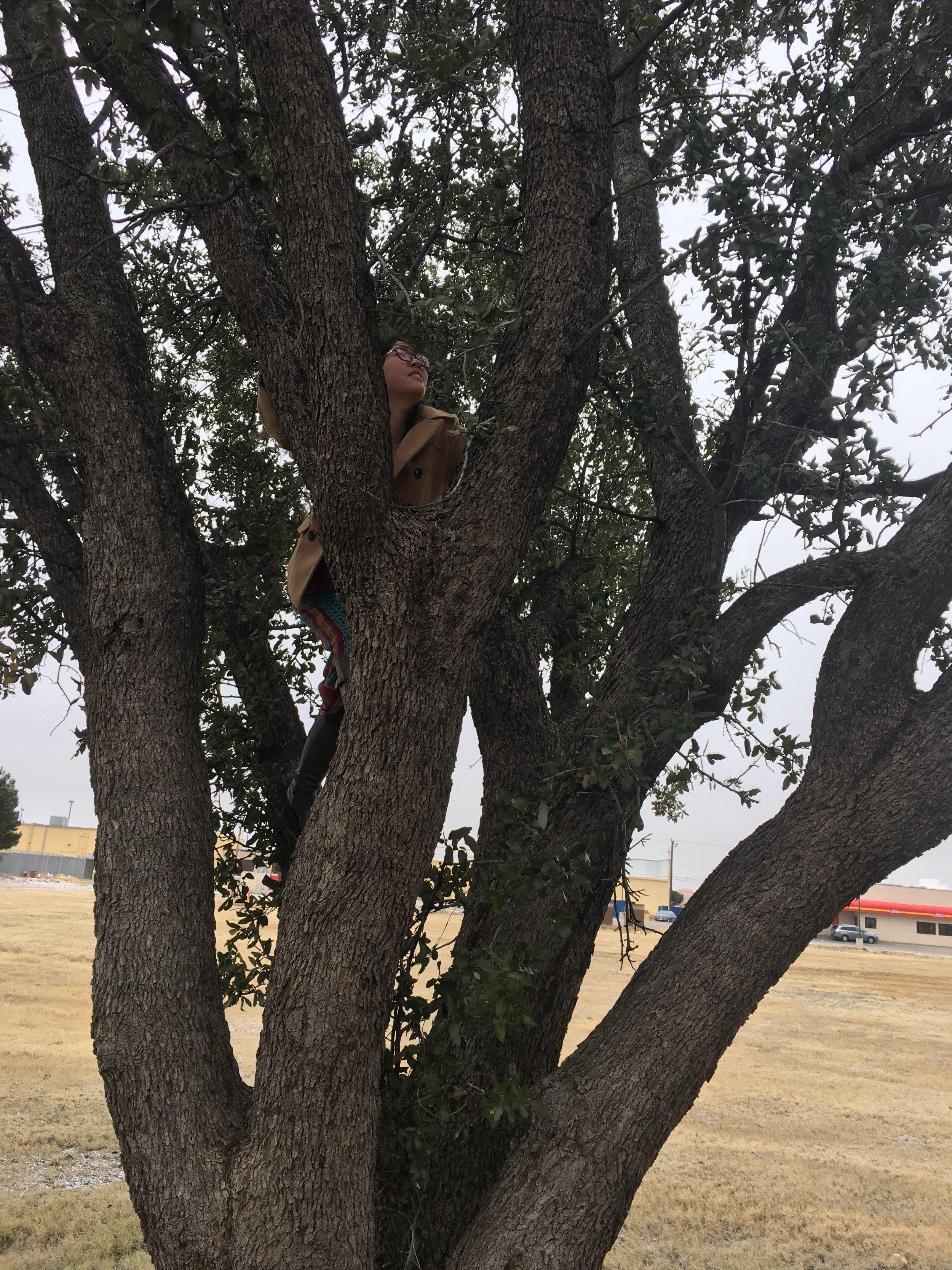 climb a tree 2 .JPG