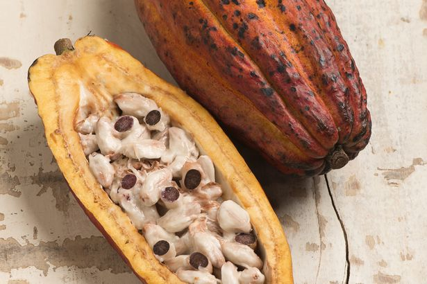 Cocoa-beans.jpg