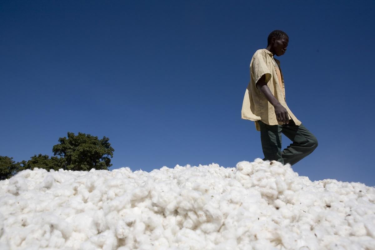 cotton 2.jpg