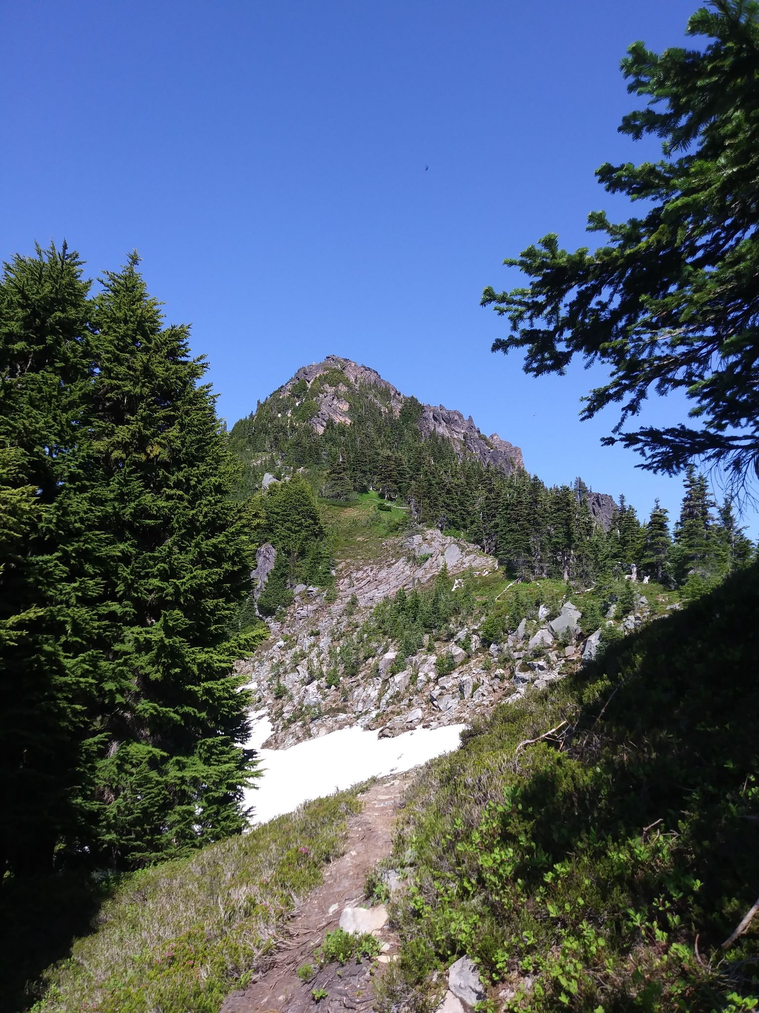 Fay Peak Trail, Mt. Rainier